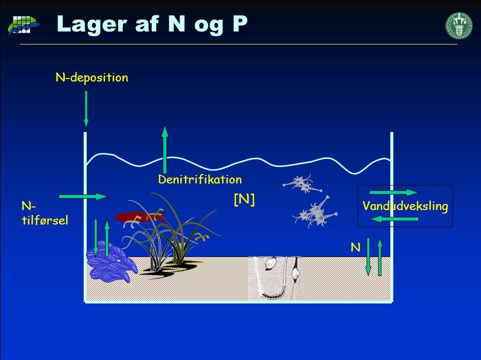 Lager af N og P [N] N-deposition Denitrifikation N-tilførsel